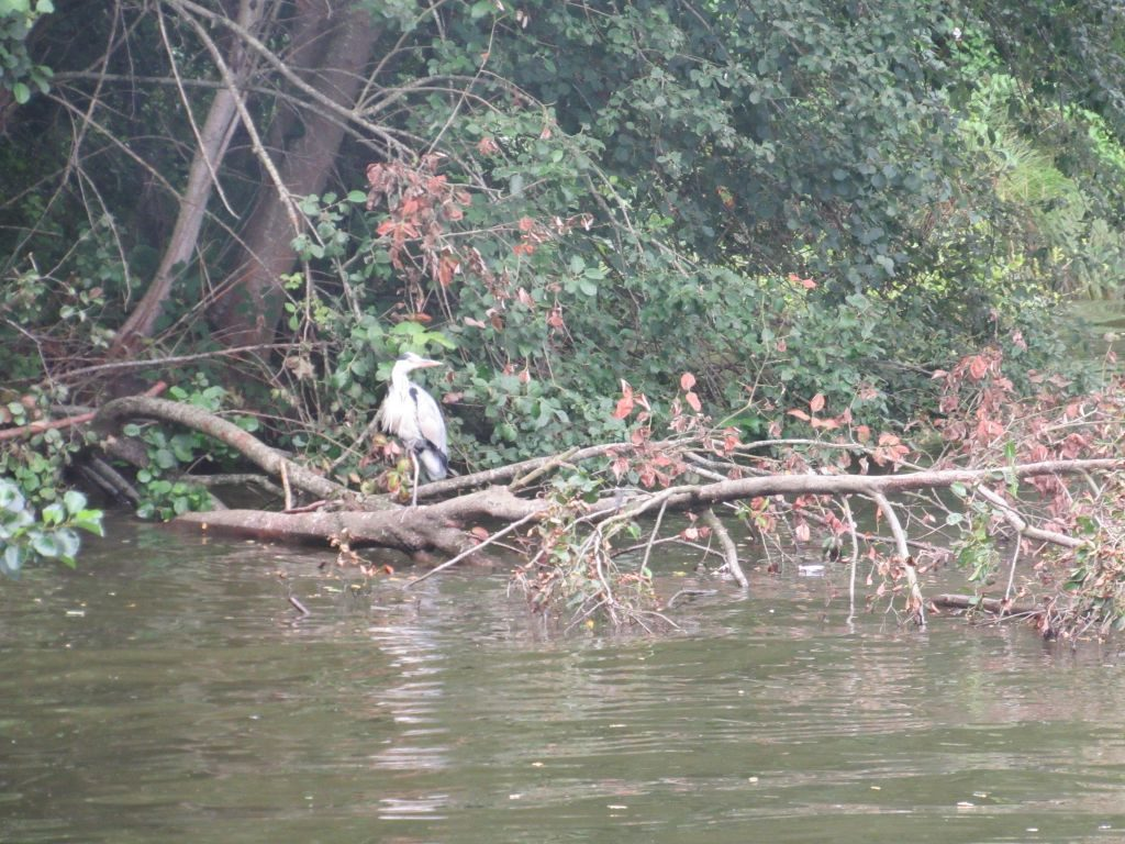 Birdlife on the Canal du Centre