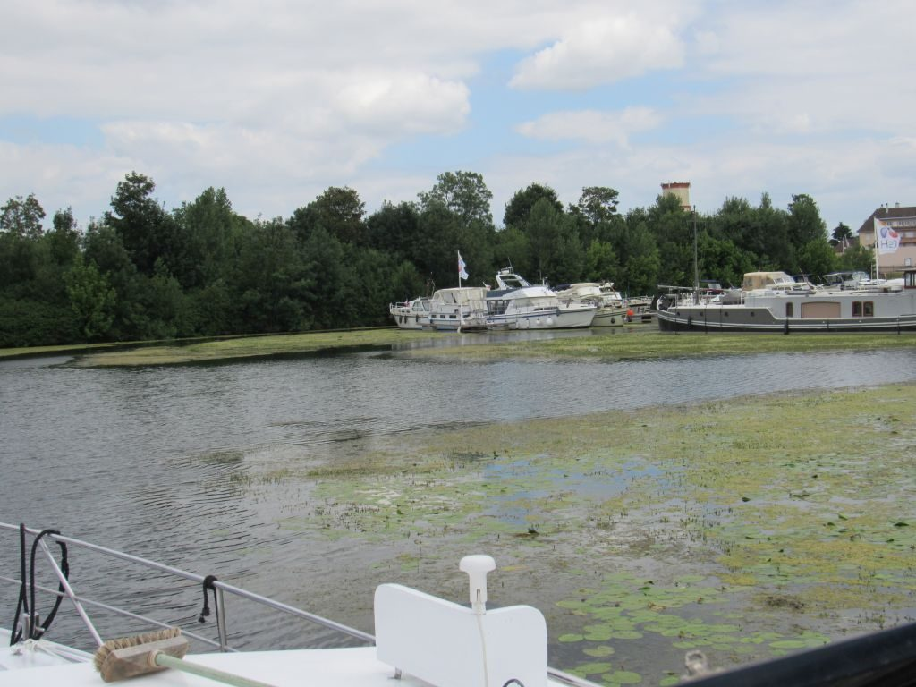 Weed in the H2O marina